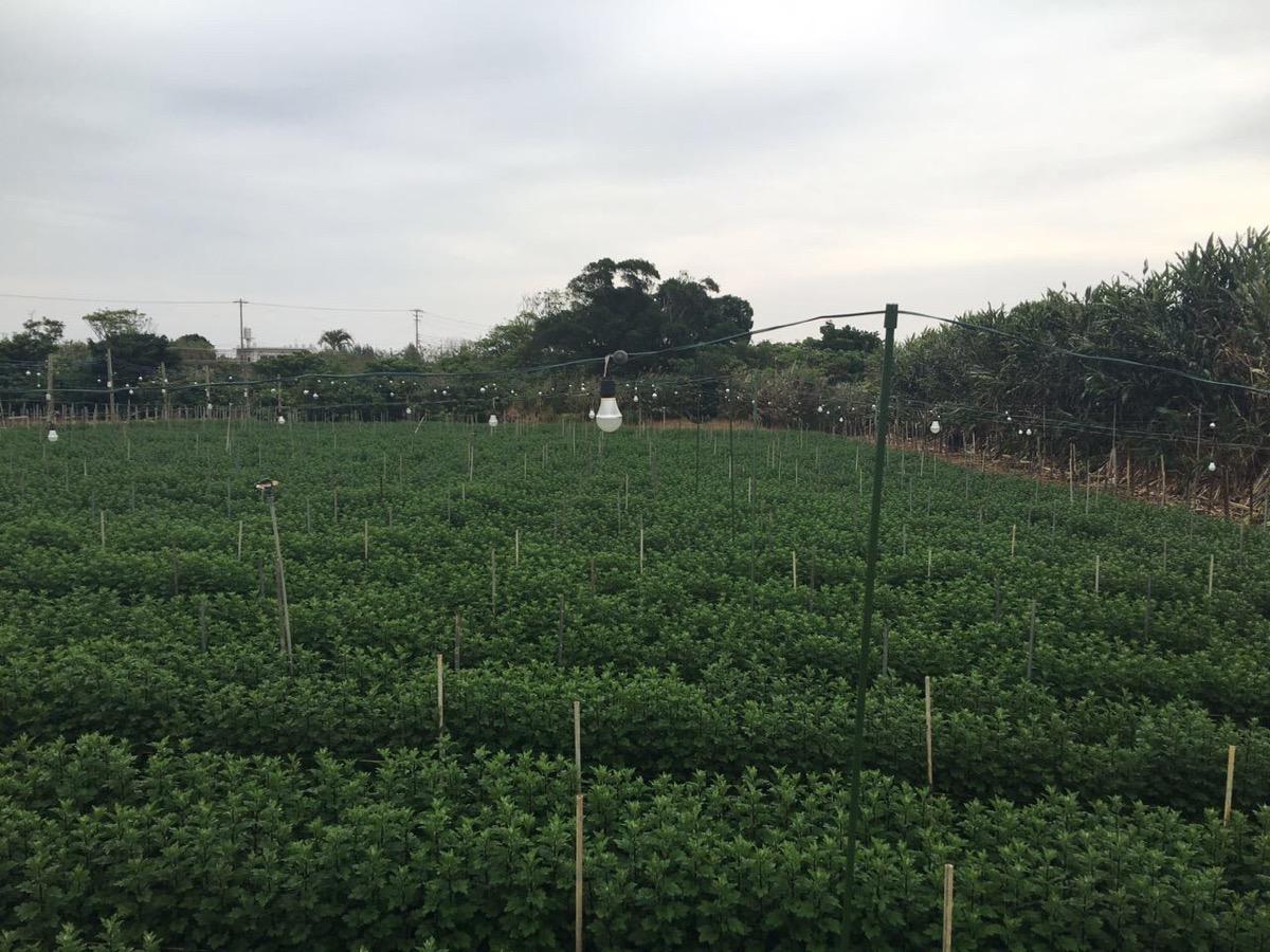 農業栽培ランプ